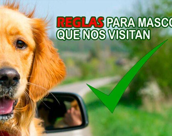 Reglas para las Mascotas que nos Visitan